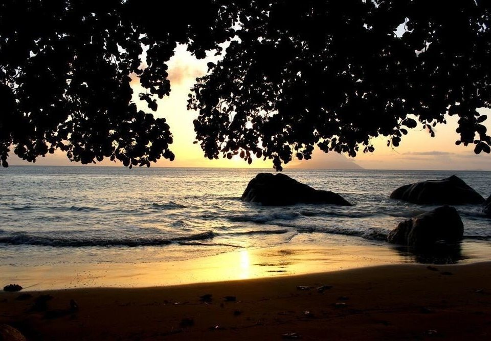 water tree Beach Sunset Nature morning evening sunlight dusk Sea dawn sunrise Sun shore wave