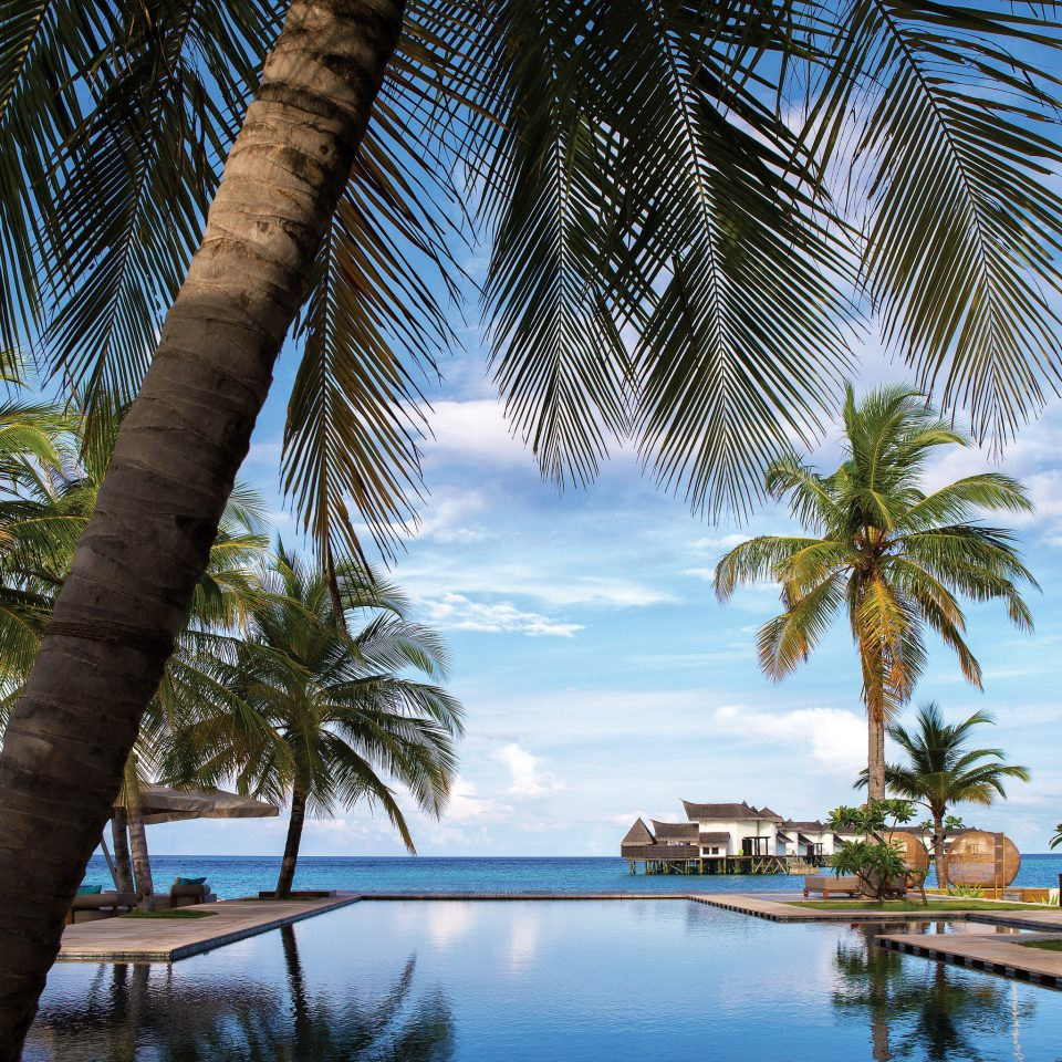 tree palm sky water plant Resort swimming pool palm family arecales tropics Ocean Sea Beach lined shade