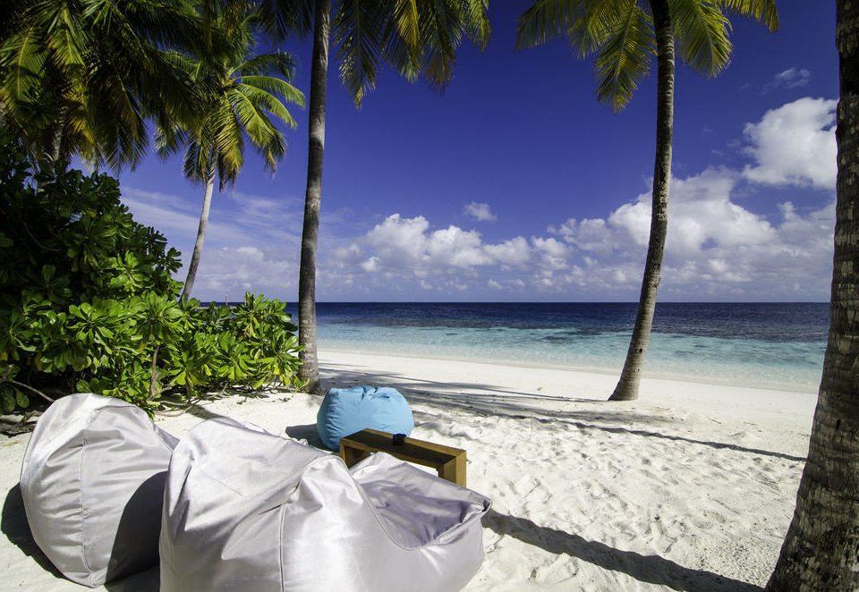 tree water Beach Sea Ocean caribbean arecales sunlight shore tropics plant sandy shade