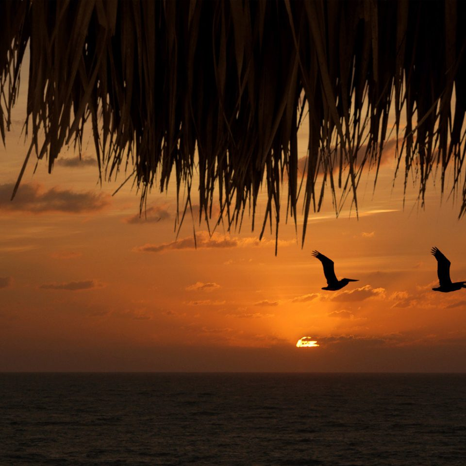 Sunset water sky Beach Ocean horizon sunrise tree morning Sea sunlight dawn evening dusk Sun shore plant sailing vessel sandy