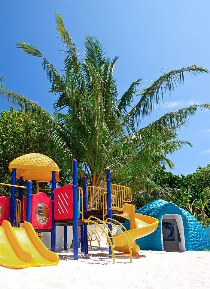 tree leisure Beach Resort yellow arecales Water park Playground colorful