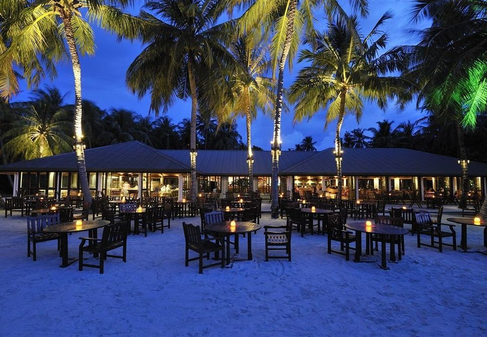 tree palm chair Resort night evening Beach lined restaurant Pool arecales surrounded