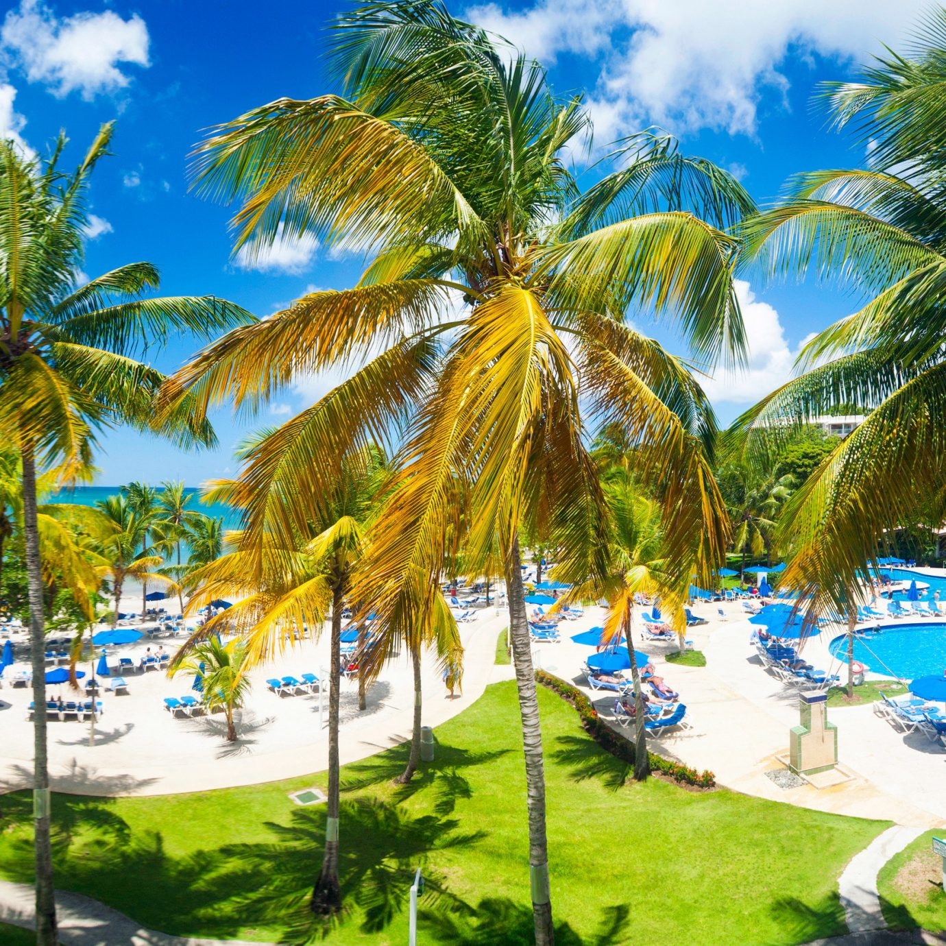 tree sky grass palm caribbean plant Beach Resort palm family arecales tropics Pool