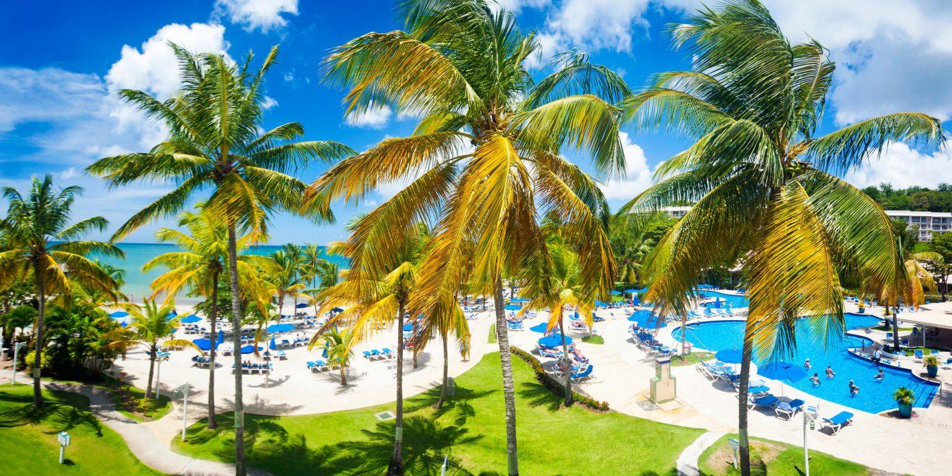 tree sky grass palm caribbean plant Beach Resort palm family arecales tropics Pool