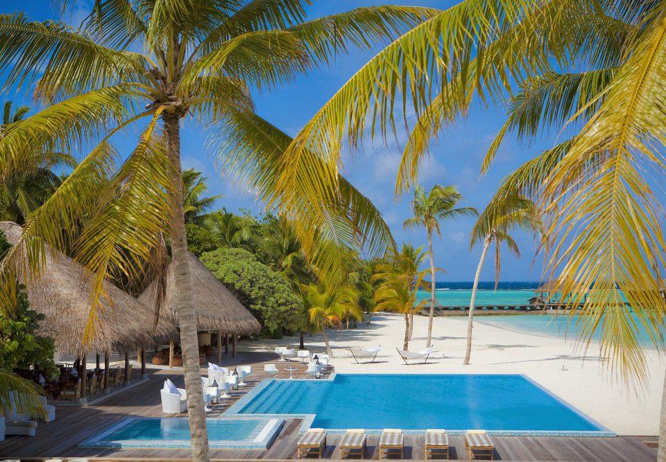 tree sky palm swimming pool leisure Resort plant caribbean arecales Pool Beach tropics lined