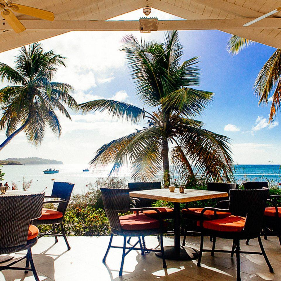 tree chair palm leisure Resort plant caribbean arecales restaurant home Pool Beach Villa shore lined shade