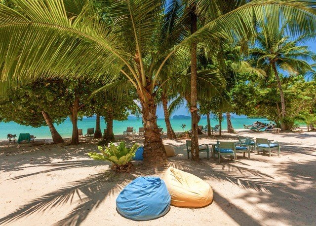 ground tree Beach palm Resort plant caribbean arecales swimming pool palm family tropics sandy lined shade shore day