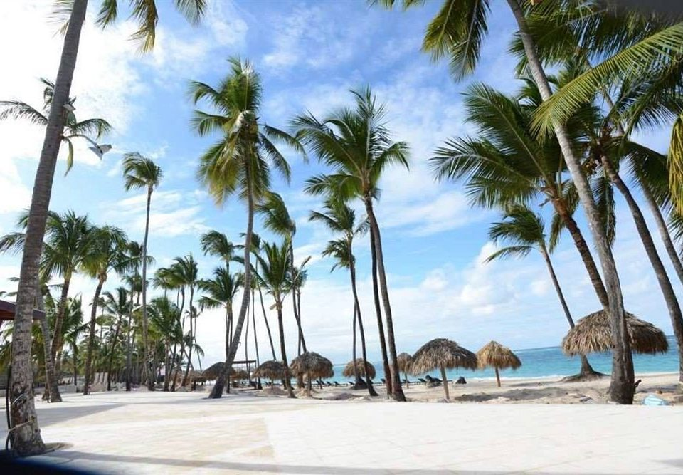 tree sky palm plant Beach caribbean Resort palm family arecales tropics shade lined sandy shore