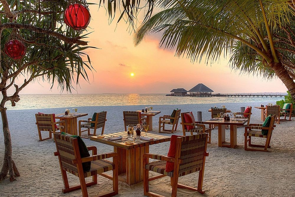 tree water chair umbrella ground Beach Resort palm restaurant caribbean arecales lined shore