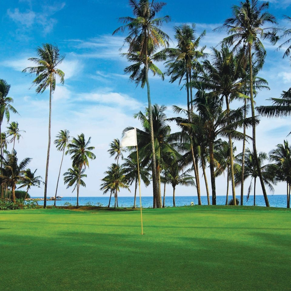 tree sky palm grass plant structure palm family sport venue Beach arecales caribbean golf course golf club Resort lawn tropics