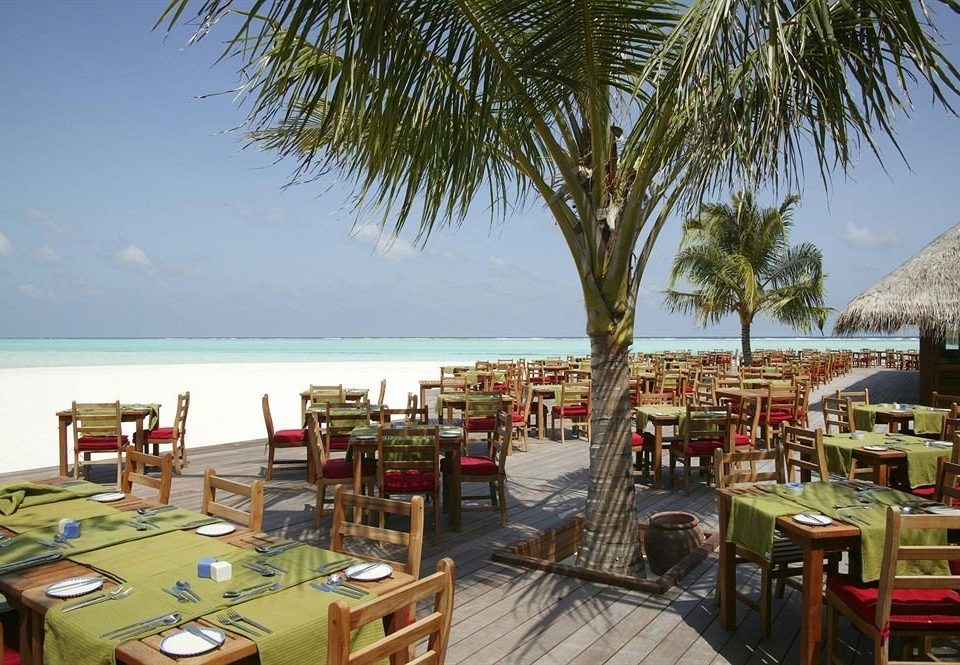 sky tree Beach chair leisure Resort restaurant arecales caribbean lined palm shore