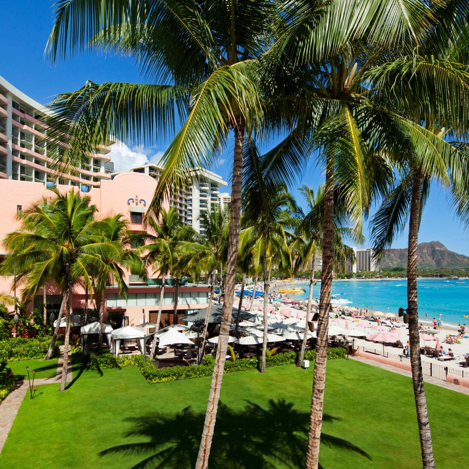 tree grass palm leisure Resort Beach caribbean arecales palm family plant tropics lined shore