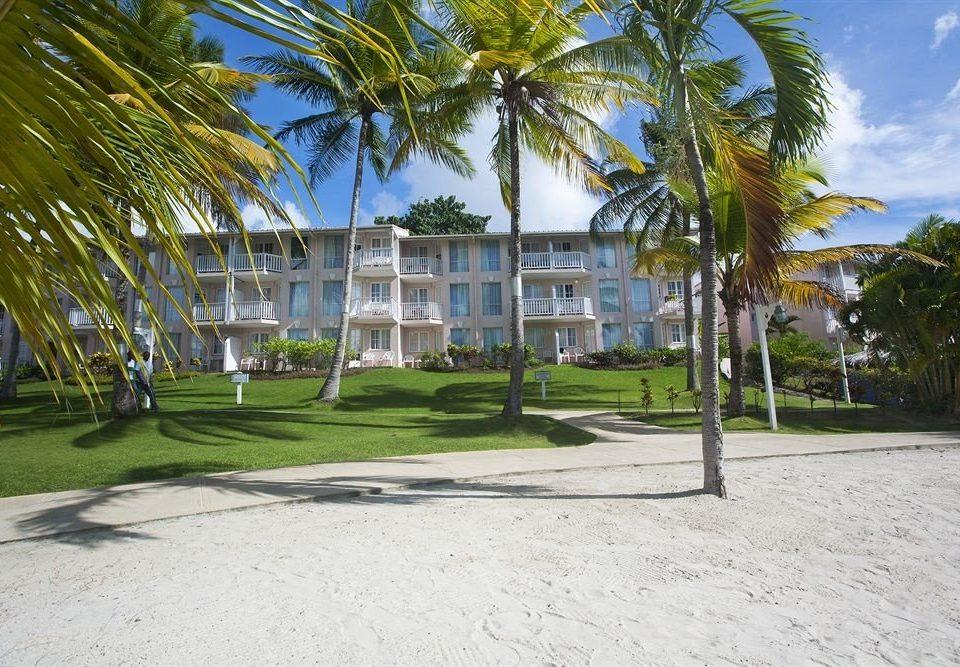 tree plant palm property residential area Resort neighbourhood condominium home arecales walkway Beach