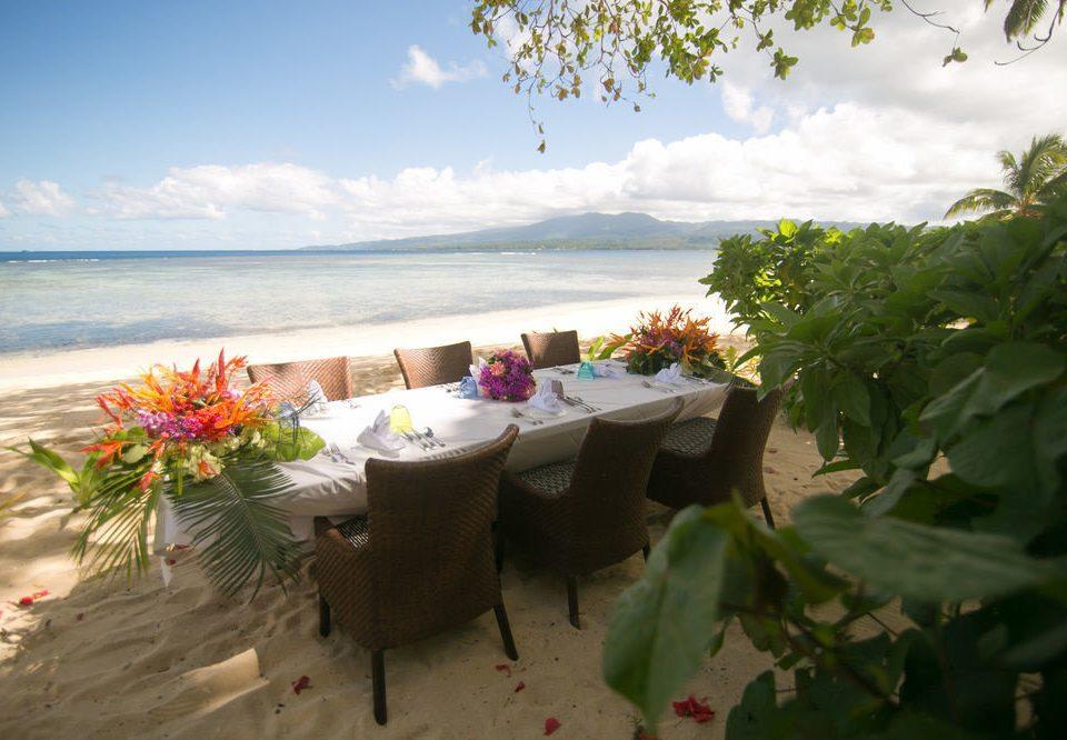 plant flower Beach Resort shore