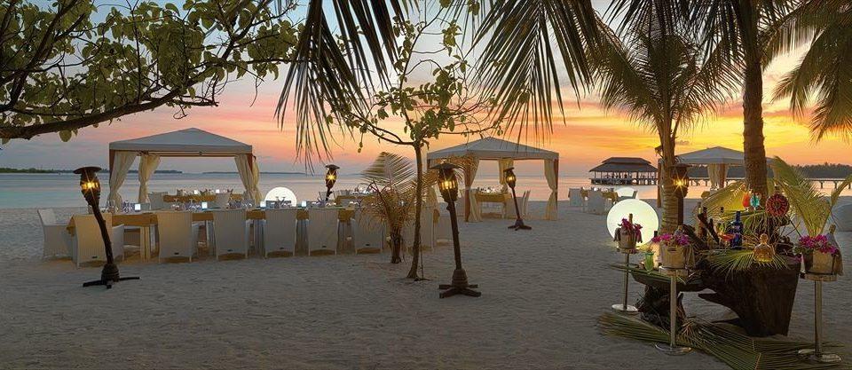 tree palm Resort Beach walkway plant shore sandy