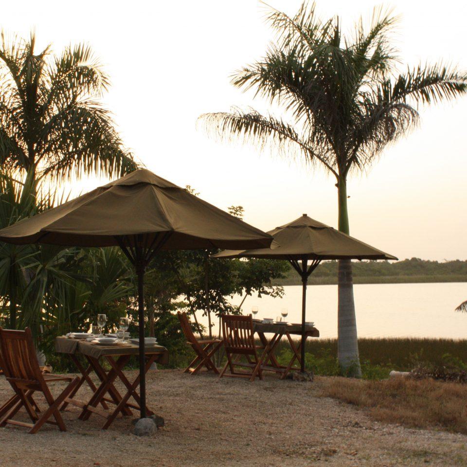 Beach tree sky plant savanna Resort shade palm arecales Safari sandy