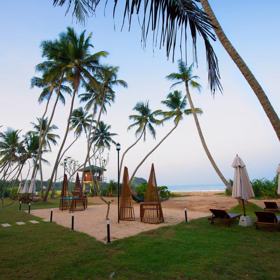 sky grass tree palm plant Beach palm family arecales Resort tropics woody plant Sea caribbean day