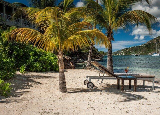 tree ground Beach palm caribbean Resort palm family arecales plant tropics sandy Sea shore walkway shade lined