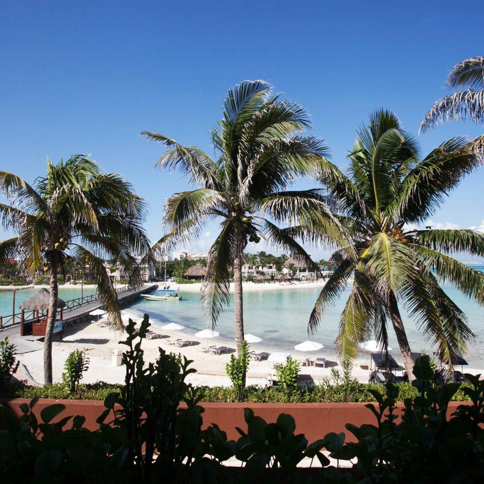 tree palm sky Beach palm family Resort arecales tropics woody plant caribbean Sea plant lined