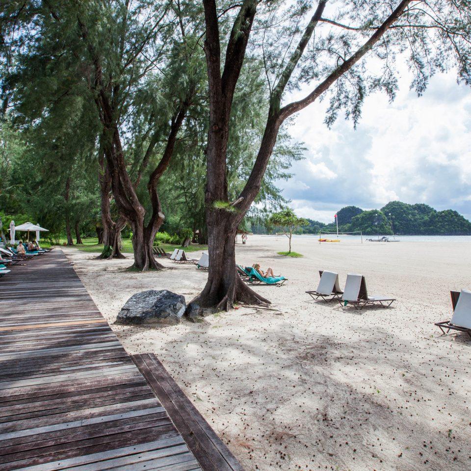 tree ground sky walkway Beach Resort Sea lined shade sandy day