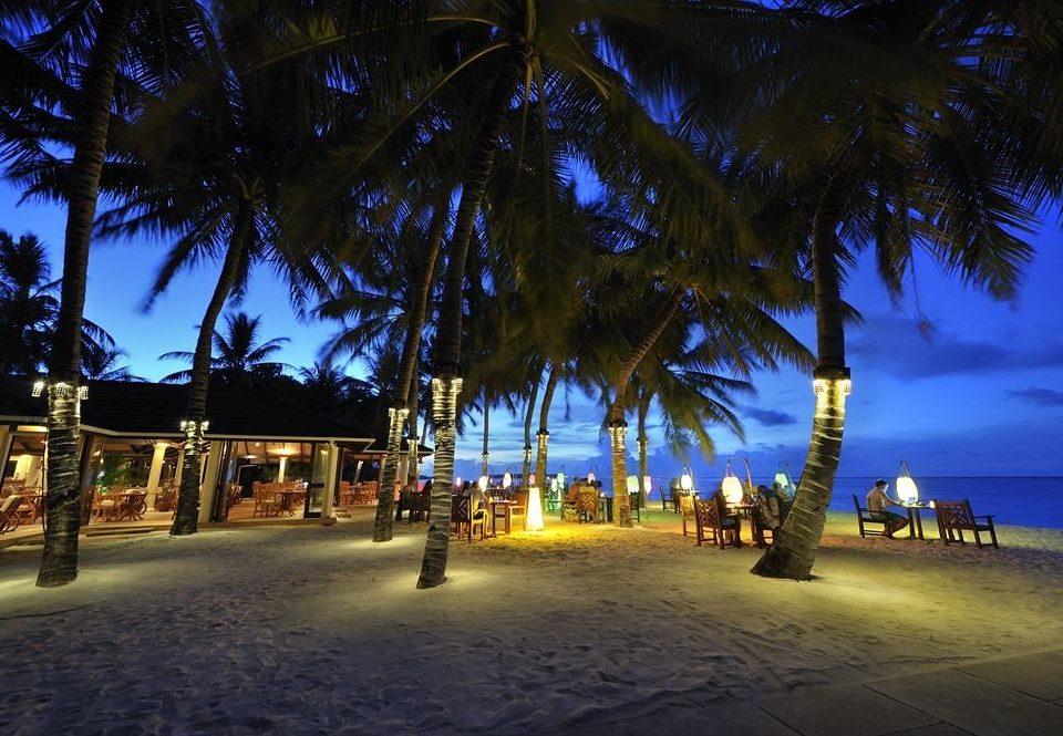 tree night palm light plant evening arecales Resort dusk Beach palm family lighting sunlight Sunset