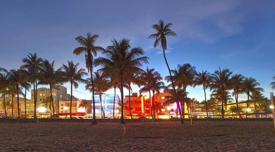 sky palm tree Beach Town walkway arecales Resort evening plant boardwalk dusk plaza panorama lined