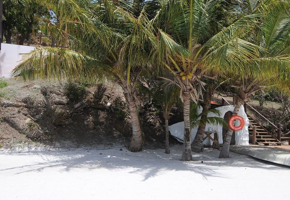 Beach Scenic views Tropical tree arecales woody plant palm plant