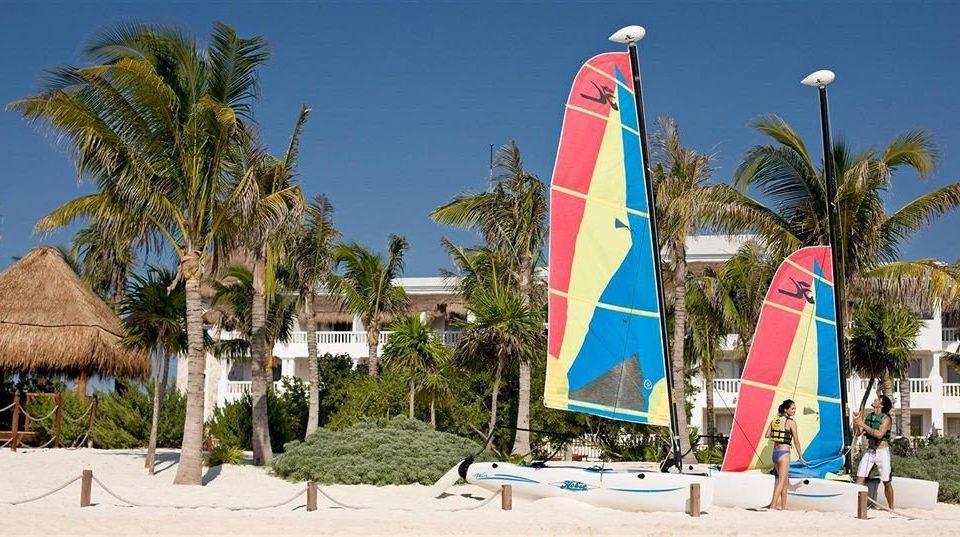 tree sky Beach wind Sea palm