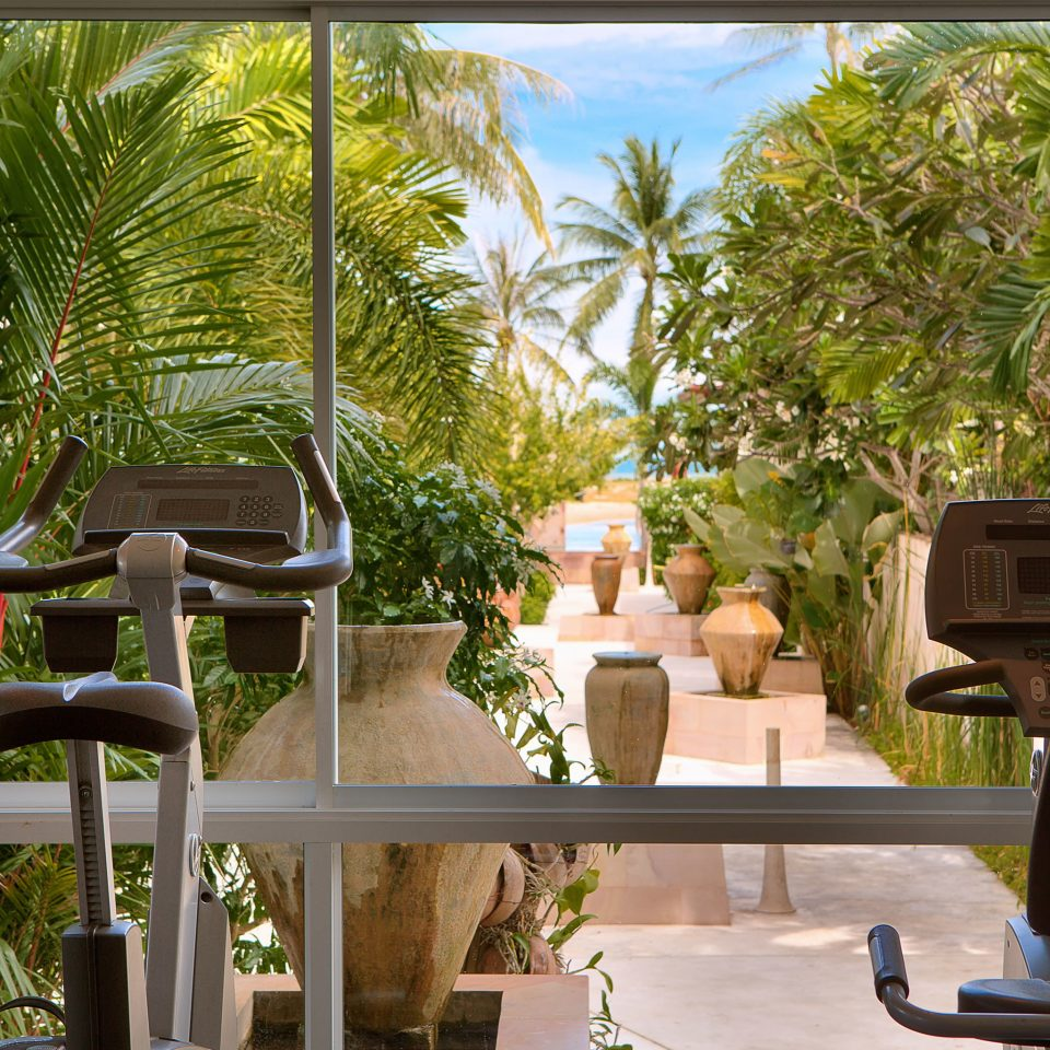 Beachfront Fitness Jungle Tropical Waterfront Wellness tree property home house Courtyard backyard Resort condominium Garden Villa outdoor structure yard mansion shade