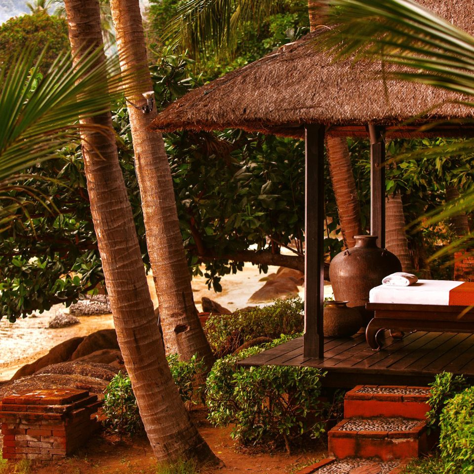 Beachfront Cultural Jungle Resort Romantic Tropical Waterfront tree palm plant botany tropics arecales palm family rainforest flower restaurant Garden