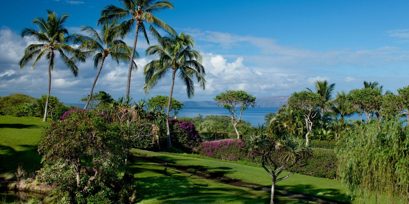 Beachfront Eco Elegant Grounds Honeymoon Island Natural wonders Scenic views Waterfront tree grass sky palm structure plant Resort arecales sport venue tropics landscape palm family Garden golf course lawn swimming pool botanical garden plantation lush surrounded