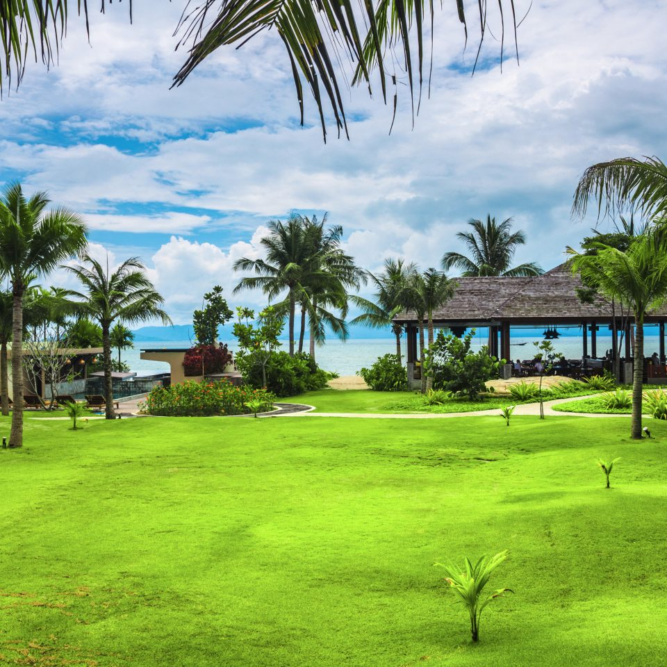 Beachfront Eco Grounds Jungle Tropical Waterfront tree grass palm plant structure leisure Resort sport venue arecales lawn golf club golf course palm family lined shade lush