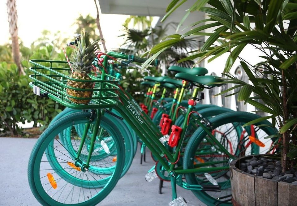 bicycle plant vehicle wheel green mountain bike sidewalk bmx bike bicycle motocross sports equipment endurance sports palm tree bicycle rack