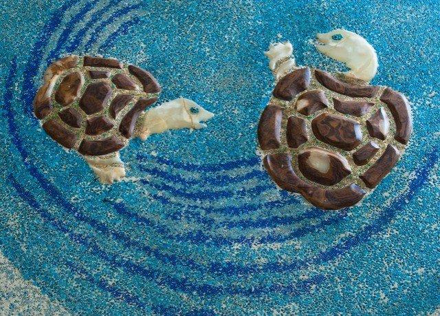 turtle sea turtle marine biology reptile biology blue