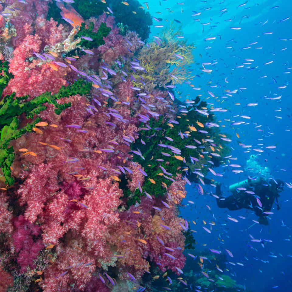 habitat coral reef reef coral marine biology biology plant coral reef fish underwater flower swimming colorful surrounded colored ocean floor