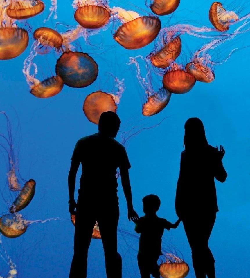 marine biology biology organism coral reef illustration underwater