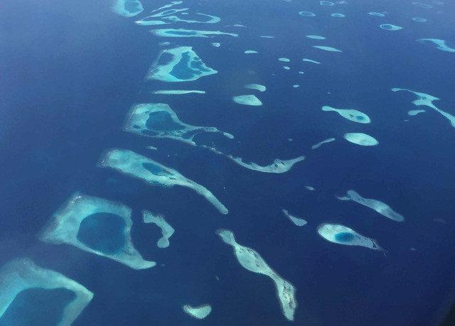 marine biology biology reef freediving underwater diving marine mammal ocean floor