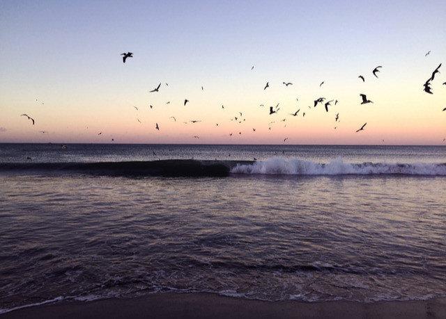 sky water Sunset Sea horizon Ocean shore sunrise wave calm flock seabird morning Bird Nature dawn evening coastal and oceanic landforms Coast dusk bird migration wind wave animal migration