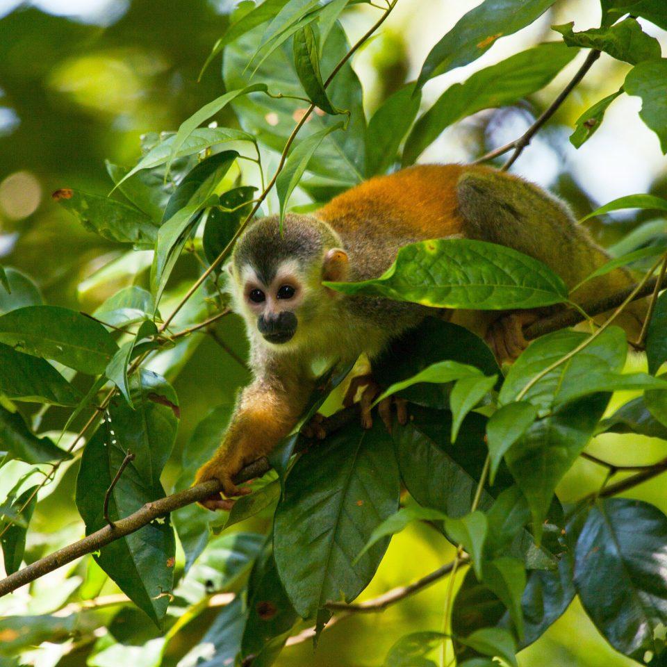 tree animal branch mammal Bird vertebrate beak Wildlife green fauna monkey primate leaf Jungle rainforest
