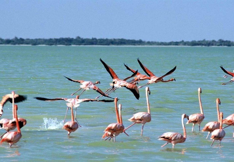 water sky flamingo Bird fauna Lake water bird shore