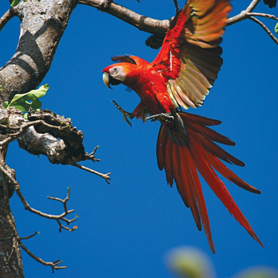 Natural wonders Outdoors Scenic views tree sky animal Bird vertebrate macaw parrot fauna branch flower perching bird