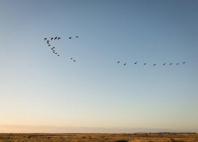 sky flying flock bird migration horizon ecosystem plain Bird animal migration atmosphere of earth flight prairie Sea Sunset shore