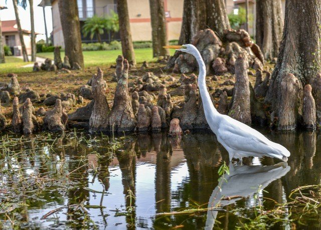 water Bird animal standing Wildlife fauna aquatic bird wetland bayou swamp pond zoo