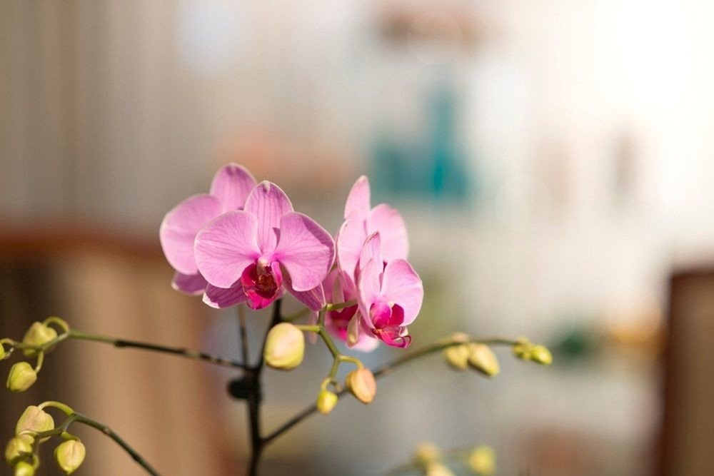 flower pink plant flora photography yellow close up macro photography botany bouquet blossom petal land plant spring floristry flowering plant branch