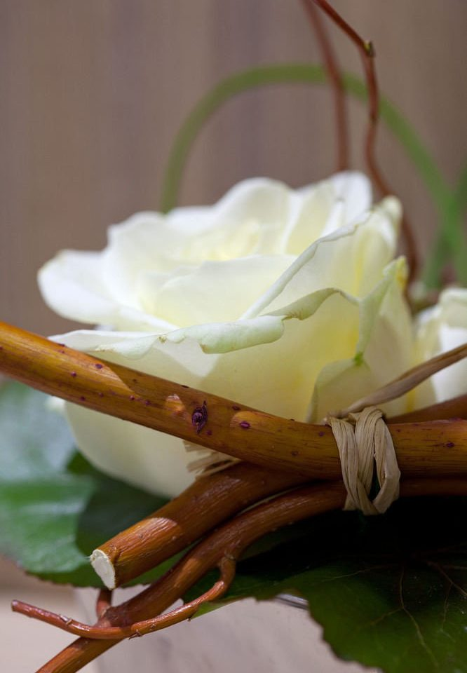 white flower flora green plant yellow macro photography close up photography botany leaf petal land plant branch blossom plant stem flowering plant flavor