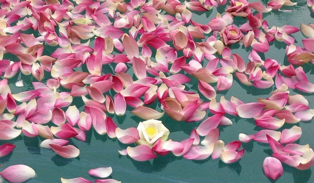 pink flower plant flora petal botany land plant leaf flowering plant blossom colored