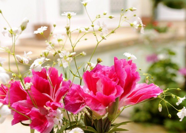flower bouquet plant pink flora flower arranging land plant floristry flowering plant petal blossom cut flowers peony flower bouquet floral design garden roses shrub colored