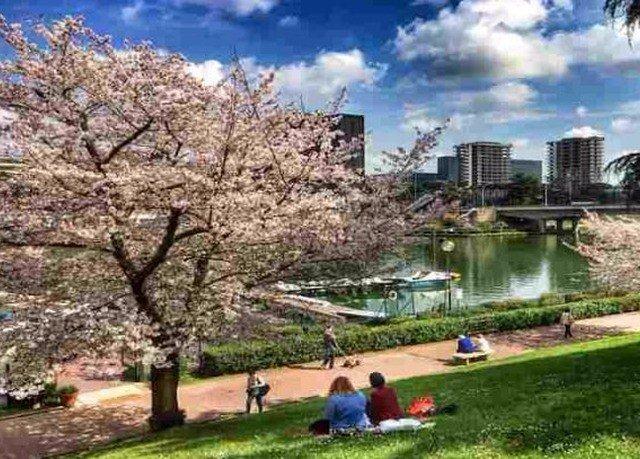 grass flower property plant park cherry blossom blossom