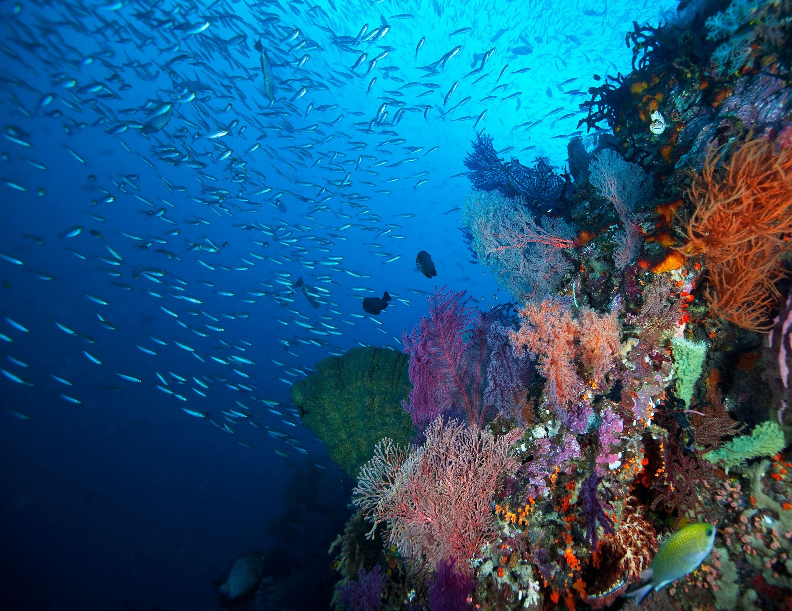 Trip Ideas habitat reef coral reef marine biology coral underwater coral reef fish natural environment biology Ocean Sea Scuba Diving diving water sport plant underwater diving colored