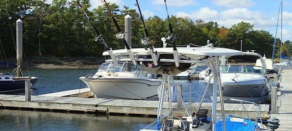 tree sky marina Boat ecosystem dock vehicle sailboat yacht catamaran watercraft